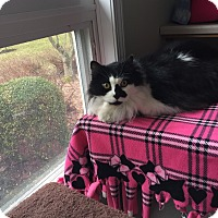 Adopt A Pet :: Happy - Victor, NY