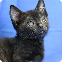 Adopt A Pet :: Sammy - Winston-Salem, NC