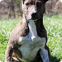 Adopt A Pet :: Nonnie - Waldorf, MD