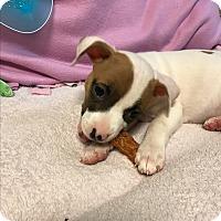 Adopt A Pet :: Sierra - Atlanta, GA