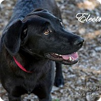 Adopt A Pet :: Electra - Clovis, CA