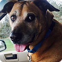 Adopt A Pet :: Peyton - Grayslake, IL