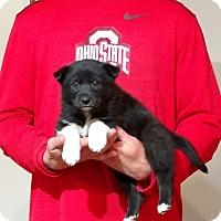 Adopt A Pet :: Marley - South Euclid, OH