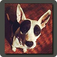 Adopt A Pet :: Daisy *MEET ME!* - Wakefield, RI