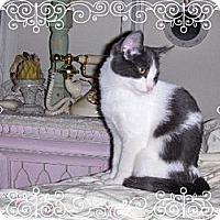Adopt A Pet :: Kalaya - Los Angeles, CA