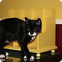 Adopt A Pet :: Patrick (LE) - Little Falls, NJ
