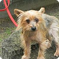 Adopt A Pet :: Mr. Scampers - Duluth, GA