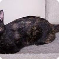 Adopt A Pet :: Jacstar - Colorado Springs, CO