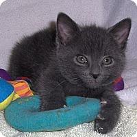 Adopt A Pet :: Furby - Richmond, VA