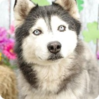 Adopt A Pet :: Sanuk - Inverness, FL