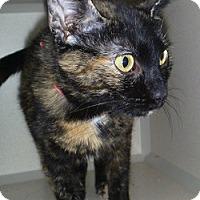 Adopt A Pet :: Molly - Hamburg, NY