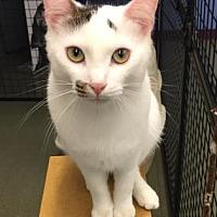 Adopt A Pet :: Frenchie - Mt. Pleasant, MI