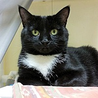 Adopt A Pet :: Dina - Lunenburg, MA