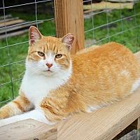 Adopt A Pet :: Mr. Bubbles - San Antonio, TX