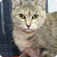 Adopt A Pet :: Shania - $50 sponsored adopt - South Bend, IN