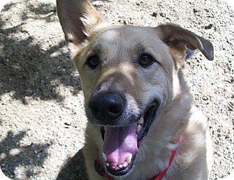 German Shepherd Dog Mix Dog for adoption in Fennville, Michigan - Ty