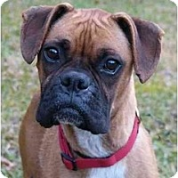 Adopt A Pet :: Emily - Mocksville, NC
