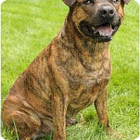 Adopt A Pet :: Andy - Chicago, IL