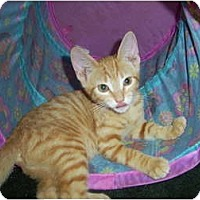 Adopt A Pet :: Andy - Mobile, AL