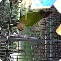 Adopt A Pet :: Dylan - Punta Gorda, FL