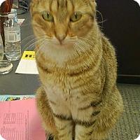 Adopt A Pet :: Frank - Hamilton, ON