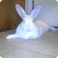 Adopt A Pet :: Cesario - Watauga, TX