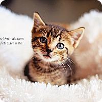 Adopt A Pet :: Cruz - Xenia, OH