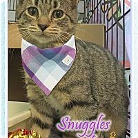 Adopt A Pet :: Elaine - East Brunswick, NJ