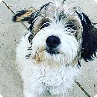 Adopt A Pet :: Teddie - Santa Barbara, CA