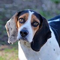 Adopt A Pet :: NICKY - Sussex, NJ