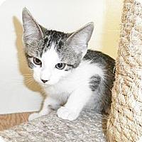 Adopt A Pet :: Dakini - Milwaukee, WI