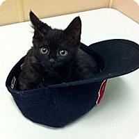Adopt A Pet :: Ellis - Seattle, WA
