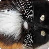 Adopt A Pet :: Hershey - Xenia, OH