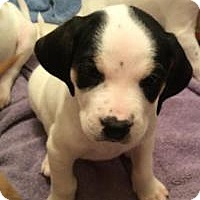 Adopt A Pet :: Aurora - Marlton, NJ