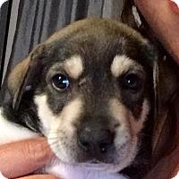 Adopt A Pet :: Pokey - Long Beach, CA