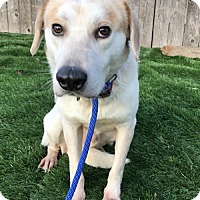 Adopt A Pet :: Mr Rogers - Raytown, MO