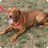 Adopt A Pet :: Precious - Colonial Heights, VA
