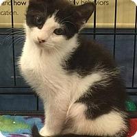 Adopt A Pet :: Aioli - Gainesville, FL