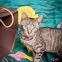 Adopt A Pet :: Zebra - Elizabethtown, PA