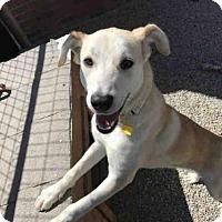 Adopt A Pet :: VIRGINIA - Frisco, CO