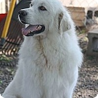 Adopt A Pet :: Bernadette - Cambridge, IL