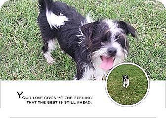 Terrier (Unknown Type, Small) Mix Dog for adoption in San Antonio, Texas - FeeFee