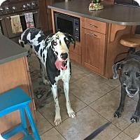 Adopt A Pet :: Ali - Albuquerque, NM