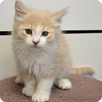 Adopt A Pet :: Rufus - Davis, CA