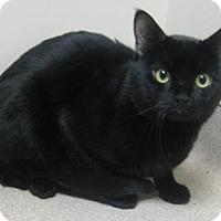 Adopt A Pet :: Zipper - Gary, IN
