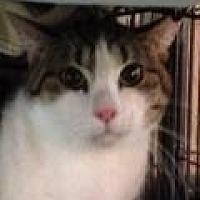 Adopt A Pet :: Mario - Porter, TX