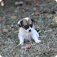 Adopt A Pet :: Duck - Groton, MA