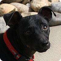 Adopt A Pet :: Glen - Edmonton, AB