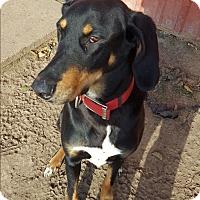 Adopt A Pet :: Kado - Indianola, IA