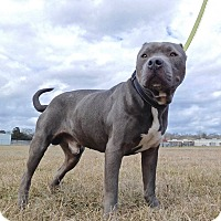 Adopt A Pet :: Blade - St. Francisville, LA